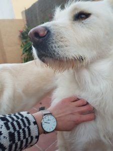 Frankbell relojes